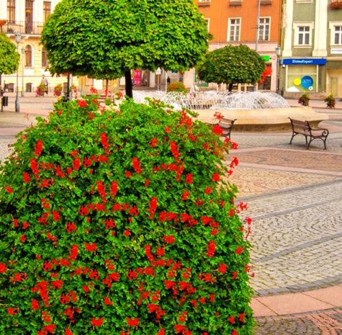 bloemtorens-stad-dorp-nornet2